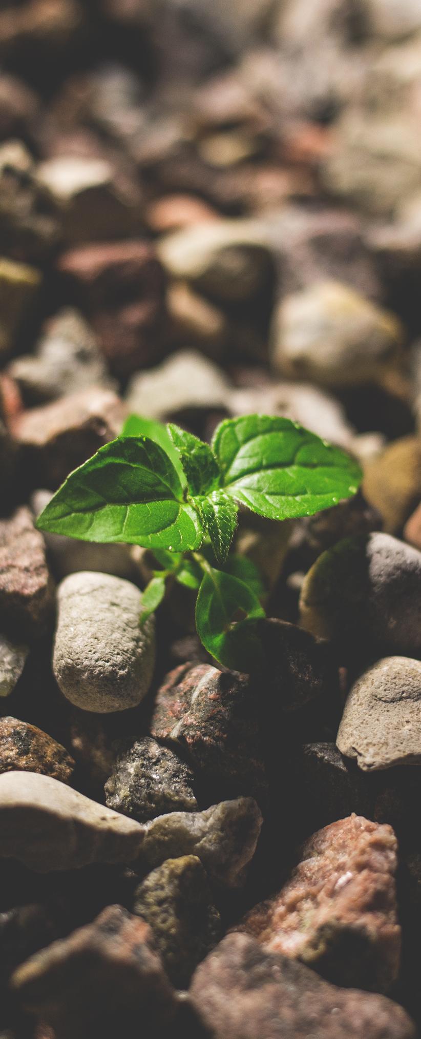 Une plante pousse comme nous vous accompagnons pour pérenniser votre entreprise grâce au business developpement